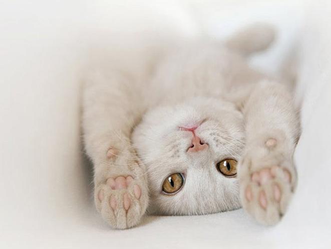 780027__cozy-cat_p